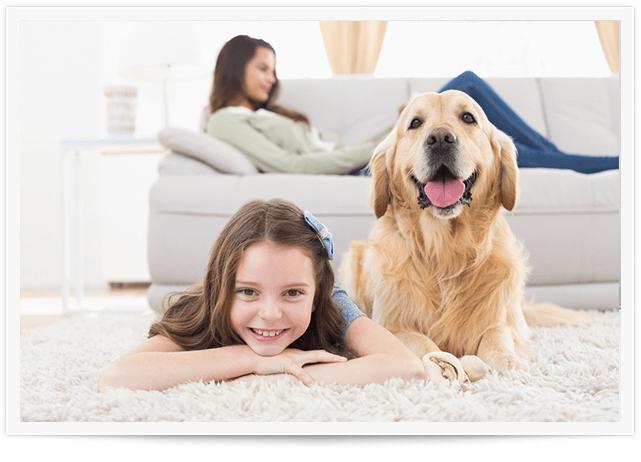 Pet Urine Removal Service